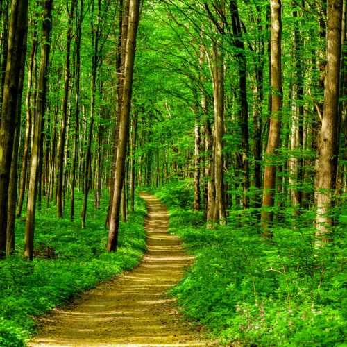 Бодхисаттва и Архат: идущие вместе рука об руку — Гил Фронсдейл