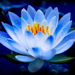 Абсолютное и относительное счастье в буддизме  —  Сергей Чернявский