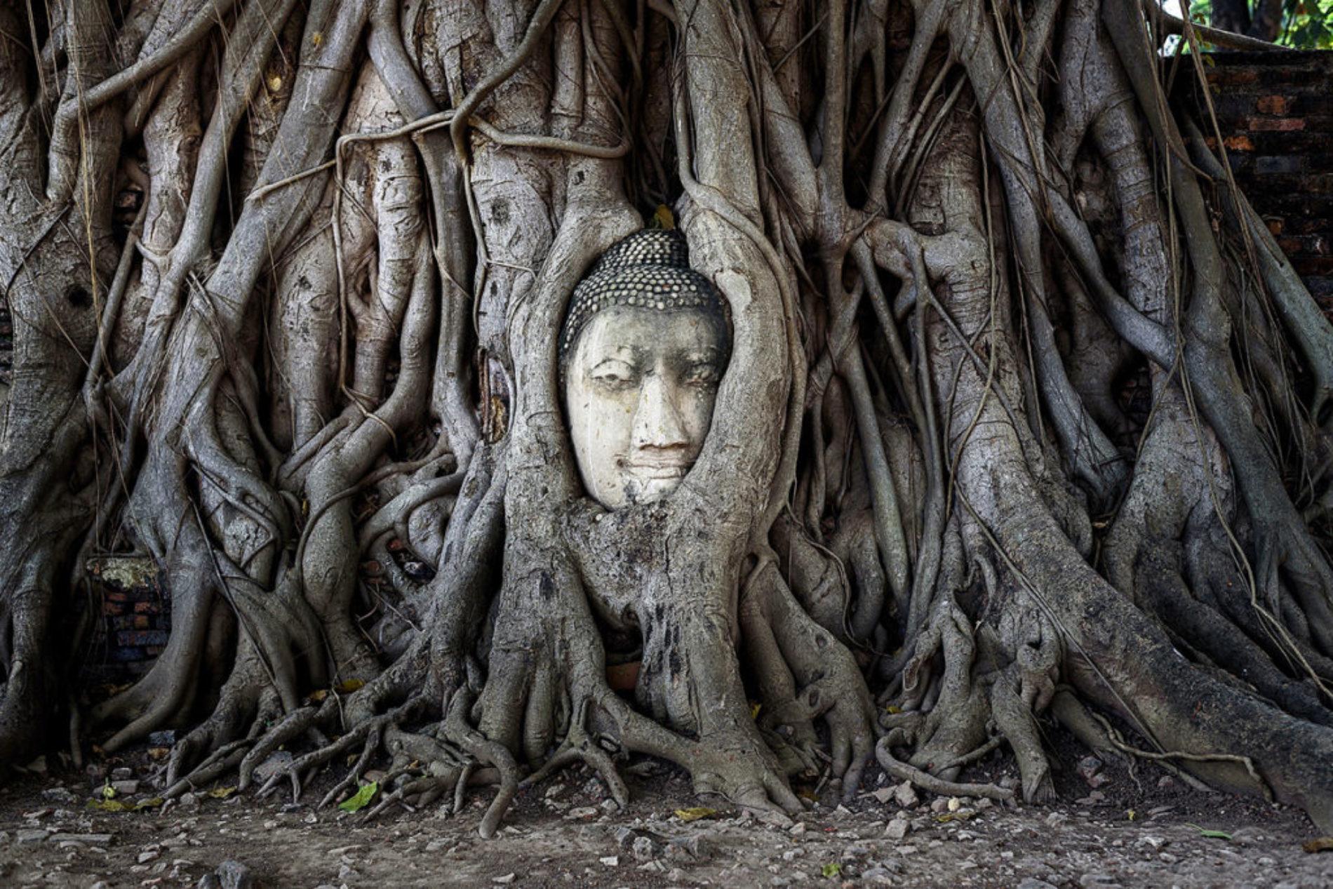 Вопрос мастерства — Тханиссаро Бхиккху