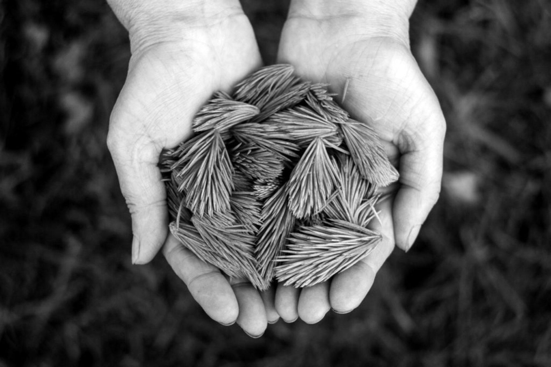 Признательность — Бханте Шравасти Дхаммика